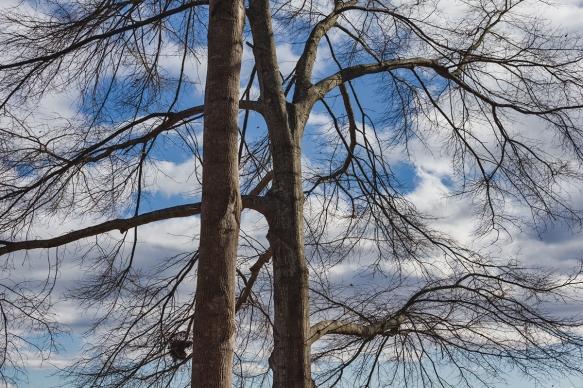 202002076743Al's houseLake Robinsontrees, lake