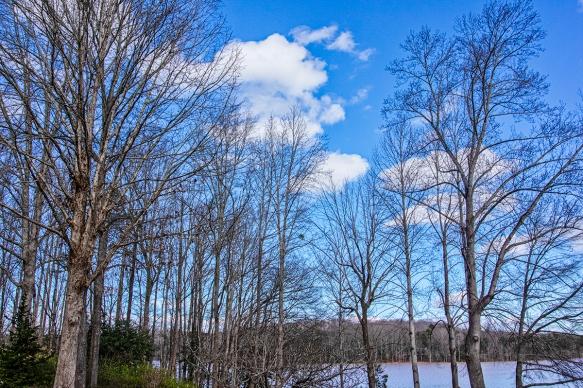 202002076766Al's houseLake Robinsontrees, lake