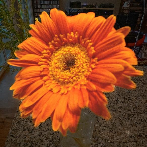 202003311465homeshadowsflowers