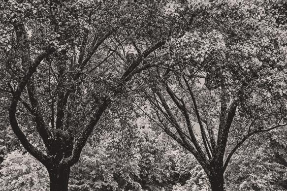 TRBankRainey, Grey Day (68)