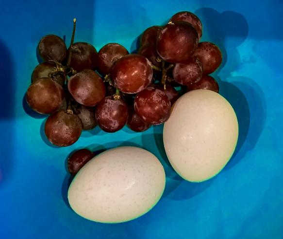 grapeseggshomeIMG_1044