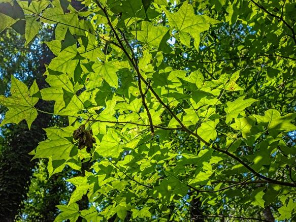 trees_DSF2202.jpg